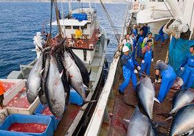 大気汚染は海のマグロも汚す! 中国から飛来する水銀が日本の食卓を変える?