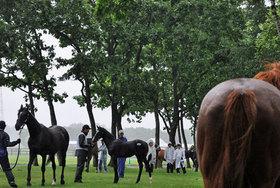 【サマーセール2017】過去最高の50億円! 1200頭を超える上場馬にDr.コパら馬主が殺到。空前の盛り上がりを見せた背景に中小牧場の意地を見た