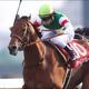 14年ホープフルS覇者・シャイニングレイが執念の復活!! 約2年ぶりに出走するレースで素質馬は再生するのか?