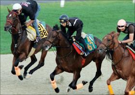 「安易に飛びつくのは危険」「120点をやってもいい」鈴木和幸が見極めた全18頭の状態。高松宮記念出走馬の最終追い切り診断公開中!