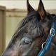 ベテラン12歳馬・スマートギアが引退。サラブレッドの最高馬齢出走記録はいくつ