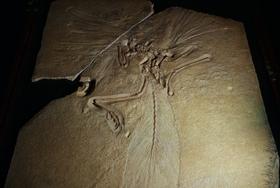 【歴史に残る標本群】大英自然史博物館展に絶対行くべき!世界の至宝が集結