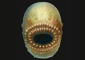 「人類最古の祖先」を中国の海底で発見? 5億4千万年前の珍妙奇天烈な海洋生物