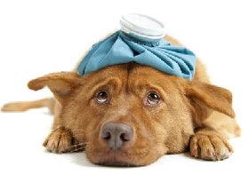 ペットの傷病ランキングTOP3…3位「下痢」、2位「外耳炎」、1位は?