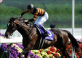 宝塚記念、軸馬にすべきはキタサンブラックではない!絶対に知っておくべき関係者情報