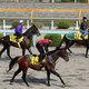・2017新馬戦開幕!注目の新種牡馬はオルフェーヴル、 ロードカナロア? 地方ではエスポワールシチーが好調!2018日本ダービーを目指す熱い戦いに注目!