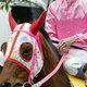 高知競馬10年間で「売上10倍」の快挙! かつてハルウララ騎乗の武豊騎手が「悲惨」と憂いた競馬場が「時代の風」に乗る