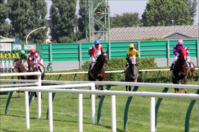 JRA獣医師の「医療ミス」で競走馬が死亡......将来的に医療に携わらない