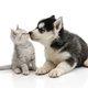 家の中でペット飼うのは危険?世界で年間5万人が狂犬病で死亡、キスや一緒寝はNG行為