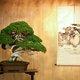 うどん県・香川、今度は「盆栽県」で世界進出始動…ガールズユニット「ボンクラ」結成