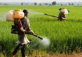 農産物への抗生物質散布が野放し…薬剤耐性菌が増殖、死亡者ががん上回るペース
