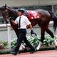 【香港国際競走・展望】「世界王者」ハイランドリールVS「菊花賞馬」キセキが激突!日本馬8頭と海外馬の力関係は?