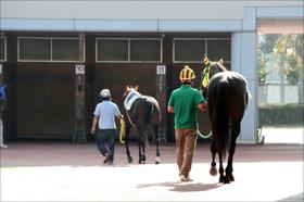 JRA松田国英厩舎「最後の大物」降臨か......良血馬を千切り捨てた「サトノの切り札」に期待大