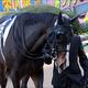 JRA「親子調教師」の悲喜こもごも......「所属馬問題解消」も「スタッフのイメージ」根強く?