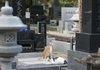山口組初代組長の祥月命日での思い出…今年、墓参したのが、六代目山口組だけだった理由は?