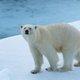 南極vs.北極旅行、一生に一度行くならどっち? あらゆる面から徹底比較!