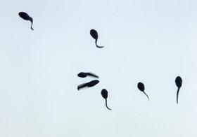 """今度は""""精子の老化"""" 「精子検定」に追い詰められる男たち?!"""