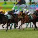 高松宮記念は前走敗退の「あの関西馬」が来る!人気落ちで高配当必至、陣営は自信満々