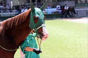 NHKマイルC(G1)テトラドラクマ「牝馬有利」の波に続く? 過去上位馬との「共通点