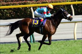 JRA「牝馬3冠」国枝栄調教師の苦悩......アーモンドアイの大成功も素直に喜べない「現代版・牧場巡り」の実態とは