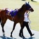 【紫苑S(G3)展望】最後の一冠を目指して!3歳牝馬の真剣勝負の行方は?