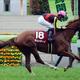 JRA「元牝馬クラシック有力」チェッキーノ復活へ! 2年ぶりのレースで「能力」見せられる?