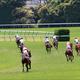 JRA角居勝彦逮捕で「78頭全馬転厩」発表、引退確定か......「臨時移籍」も厳しい裁定確実、受け入れ先は「あの厩舎」
