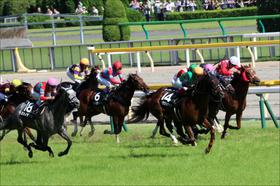 JRA新潟2歳S(G3)で引退種牡馬ゴールドヘイローの「大いなる遺産」となれるか?スティルネスが出走