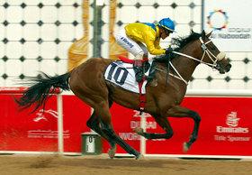 JRA「海外招待馬」急増のワケ......裏には日本競馬ファンの財布を狙う現地主催者のしたたかな野望