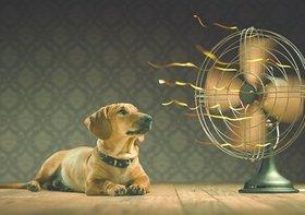猛暑、8月も続く見通し…日本の夏、30~40年前より、こんなに暑くなっていた!