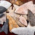 約2千年前の弥生時代、なぜ凄惨に殺された人骨が大量発掘…国と課税と戦争の誕生