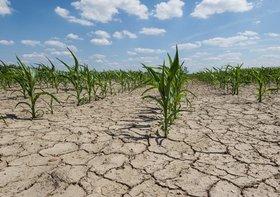 関東、渇水で断水や給水制限の可能性も…雨不足でダムの貯水率低下
