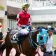武豊「オジュウチョウサンで有馬記念」確定情報。グランプリで歴史的「話題馬」レジェンドと降臨へ
