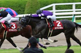 JRA宝塚記念(G1)「最強の1勝馬」エタリオウ卒業へ横山典弘「楽しかった」ステイゴールド最後の猛威が競馬界を襲う