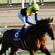 武豊マカヒキ「ジャパンC(G1)回避」ワグネリアンに続き「金子真人HD×友道厩舎」が慎重過ぎる?