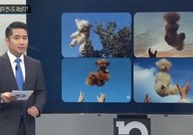 韓国インスタで「犬投げ」が虐待論争 「子ども投げ」も炎上騒動に