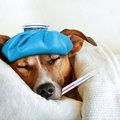 ゾフルーザ、画期的インフルエンザ治療薬に懸念点