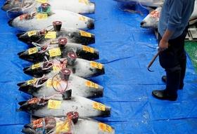 豊洲市場への移転で都内の飲食店に広がる「深刻な事態」
