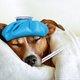 医師が教える、インフルエンザの知られざる予防法…罹ったときの間違った対処法