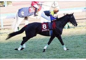 JRAシャケトラ死亡。天皇賞・春「最有力馬」突然の死に現場騒然
