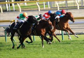 JRA日本ダービー(G1) 「令和初重賞馬」レッドジェニアルが酒井学で嵐を呼ぶ