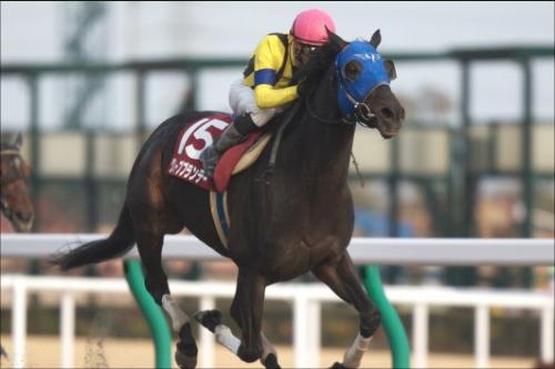 G1馬・グレープブランデーが障害競走転向!! 2度の故障から復活した同馬は最後の一花を咲かせることができるか?