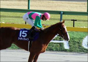 ケイティブレイブの次走は名古屋大賞典!? 長期休養をほぼ取ることなく走り続ける同馬の未来は?