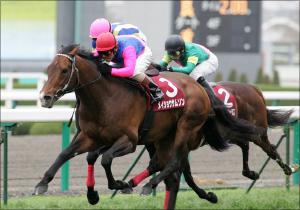 「キタサンブラックはイマイチ」「アンビシャスは期待以下」鈴木和幸が見極めた全14頭の状態。大阪杯出走馬の最終追い切り診断公開中!