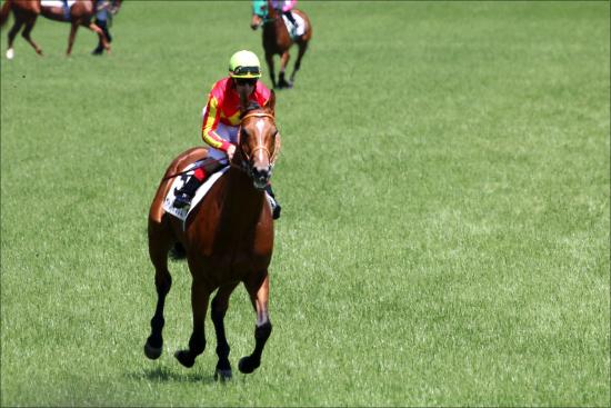 【JRA2019】弱小馬主、弱小厩舎切り捨ての始まり!? 年度競馬番組に阿鼻叫喚、そして「第13レース」の提言