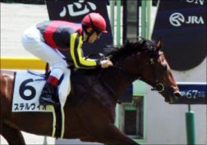 ロードカナロアいきなりの「衝撃」 産駒ステルヴィオの勝利に「欧州最強古馬」も続く?