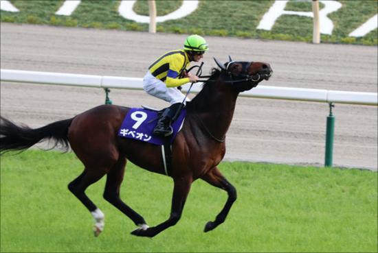 JRA1億円馬ギベオンがセントライト記念(G2)で激走の予感......良血馬がここでさらに活躍?の画像1