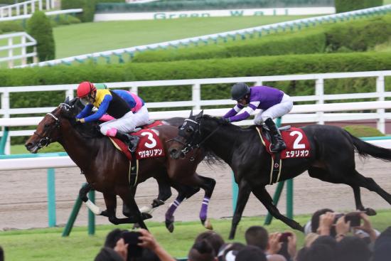 JRAデムーロあわや「騎乗停止延長」も原因はアノ馬!? 神戸新聞杯エポカドーロ潰しで出走権ゲットも和田、ボウマンに次ぐ3人目の「被害者」に......の画像2