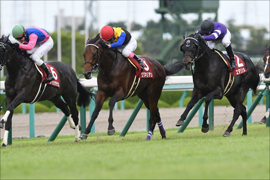 菊花賞(G1)過去10年の菊花賞馬は全て関西馬! 今年も関西馬の上位独占で波乱もある!?