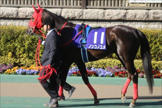 まるで別の馬になったノンコノユメ...... 若き名手のアシストを受けてかつての輝きを取り戻せるか?の画像1
